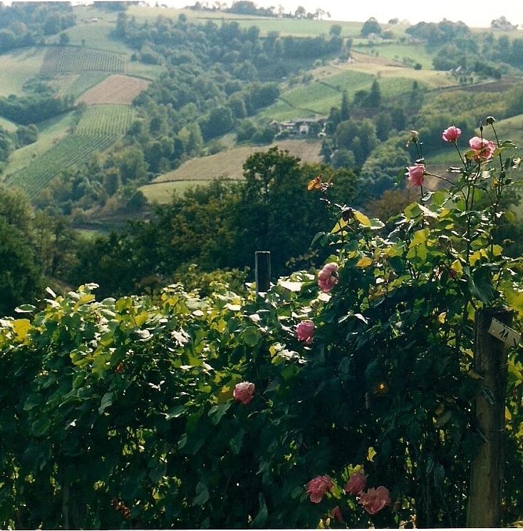 Jurançon – uma região ainda a ser descoberta